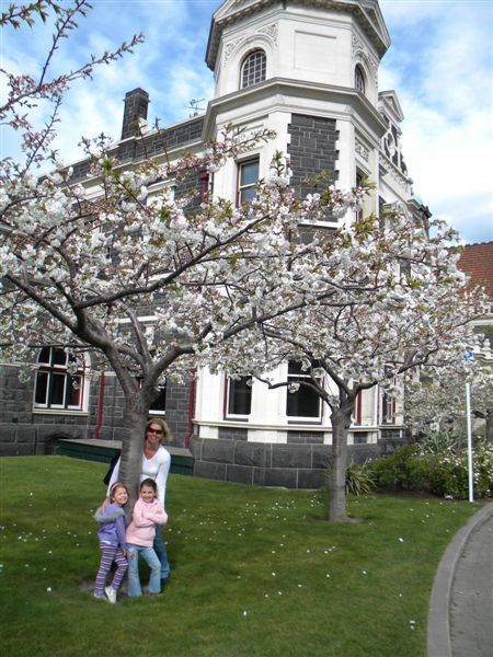 Cheery Blossoms outside the Christchurch Train Station