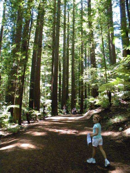 Redwood Forest - Rotorua