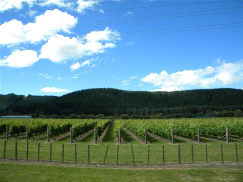 Hawke Bay wine district