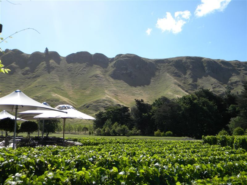 Craggy Range Vineyard